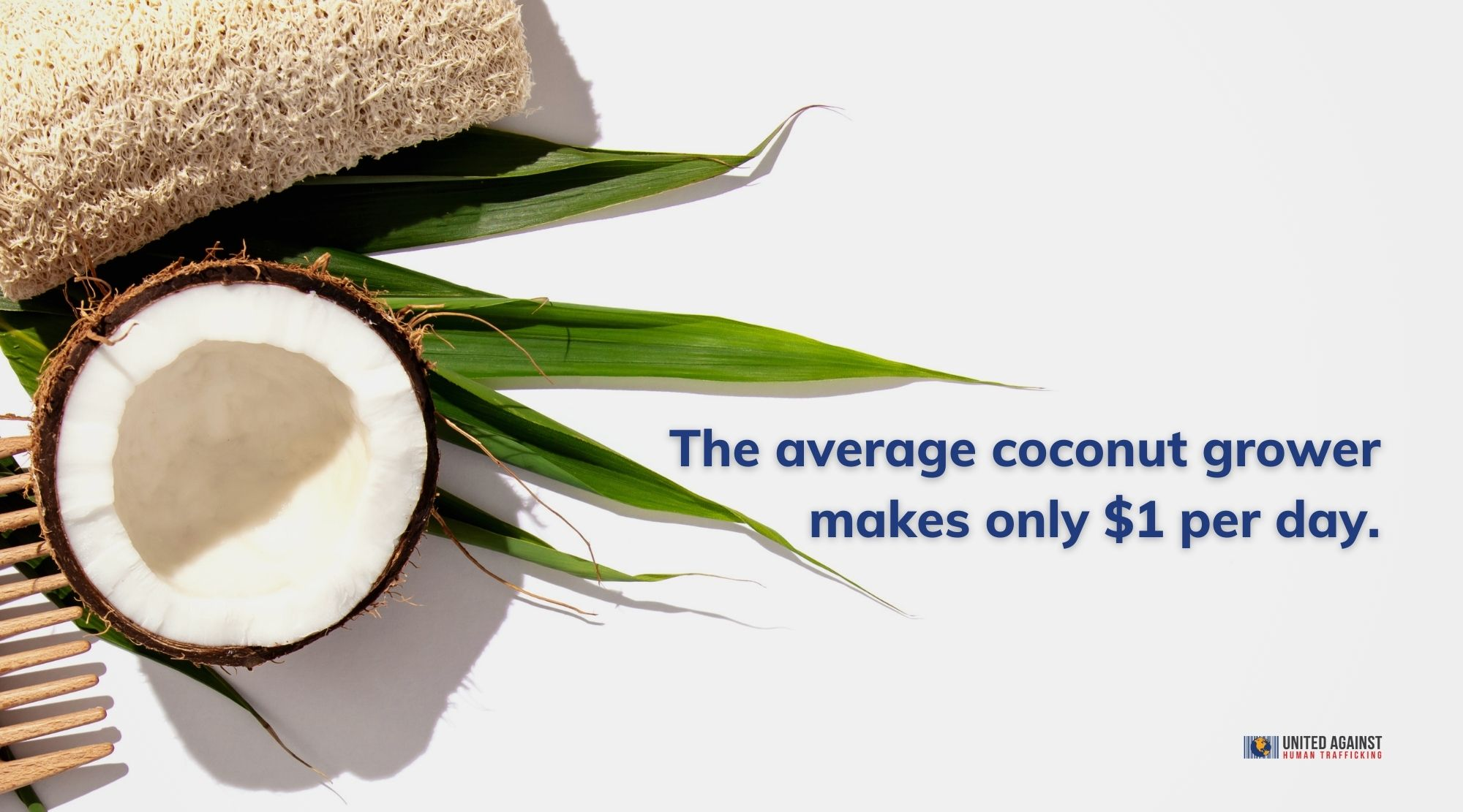 The average coconut grower makes only $1 per day